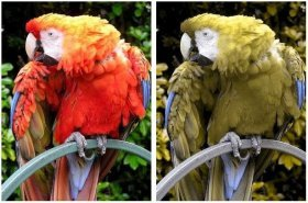 http://commons.wikimedia.org/wiki/Image:Parrot.red.macaw.1.arp.750pix.jpg