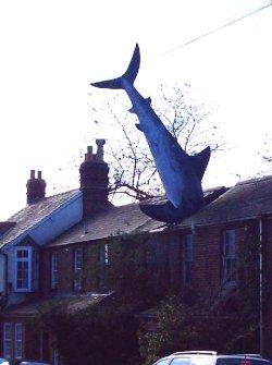http://commons.wikimedia.org/wiki/File:Oxford_shark.jpg