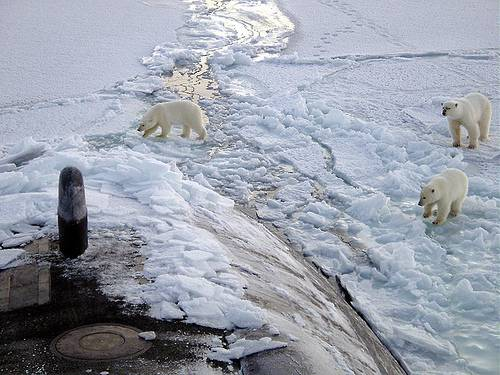 http://commons.wikimedia.org/wiki/File:Polar_bears_near_north_pole.jpg