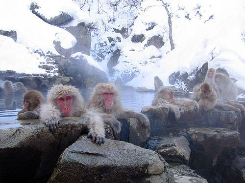 http://commons.wikimedia.org/wiki/Image:Jigokudani_hotspring_in_Nagano_Japan_001.jpg