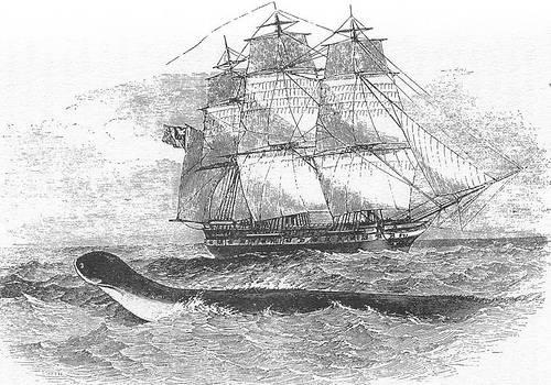 http://en.wikipedia.org/wiki/Image:Daedalus.jpg