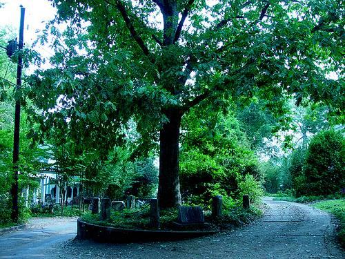 http://commons.wikimedia.org/wiki/File:Treethatownsitself.jpg