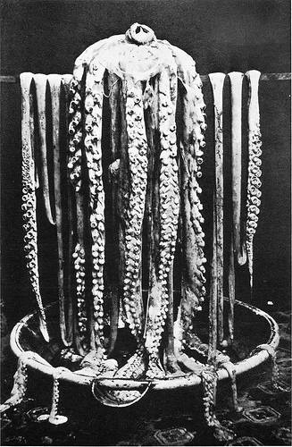 http://commons.wikimedia.org/wiki/File:Logy_bay_giant_squid_1873.png