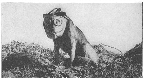 http://commons.wikimedia.org/wiki/Image:Dog_with_mask_WWI.jpg