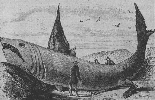 http://commons.wikimedia.org/wiki/Image:Basking_shark_Harper%27s_Weekly_October_24%2C_1868.jpg