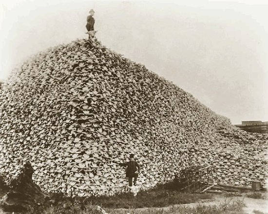 http://commons.wikimedia.org/wiki/File:Bison_skull_pile,_ca1870.png