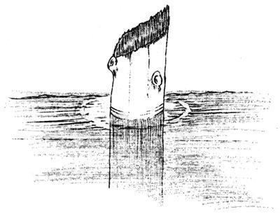 http://en.wikipedia.org/wiki/Image:Sketch_Old_Man_of_the_Lake.jpg