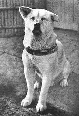 http://commons.wikimedia.org/wiki/File:Hachiko.JPG