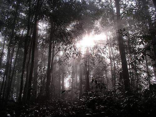 ttp://commons.wikimedia.org/wiki/File:Dawn_in_Borneo.jpg