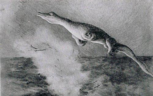 U-28 crocodile