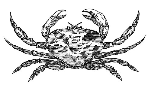 http://commons.wikimedia.org/wiki/File:Crab_(PSF).png