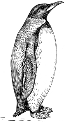 http://commons.wikimedia.org/wiki/File:Penguin_2_(PSF).png