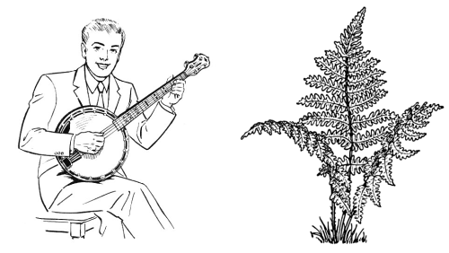 http://commons.wikimedia.org/wiki/File:Banjo_(PSF).jpg