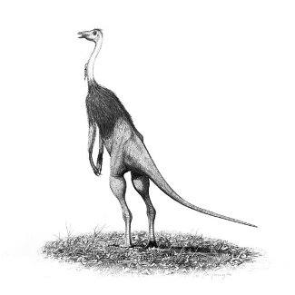 http://commons.wikimedia.org/wiki/File:Struthiomimus_altus_jconway.jpg