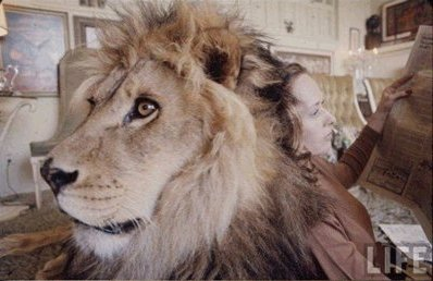 hedren lion 1