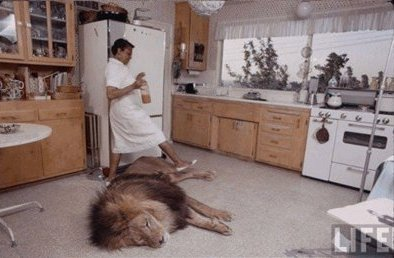 hedren lion 2