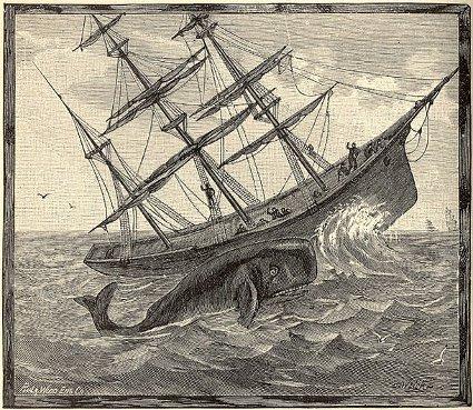 essex whale attack