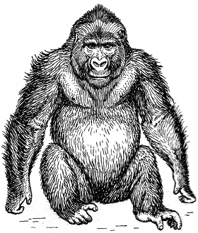 http://commons.wikimedia.org/wiki/File:Gorilla_2_(PSF).png