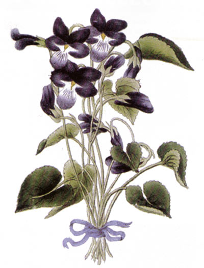 canu - corporal violet