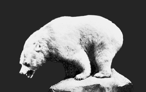 http://commons.wikimedia.org/wiki/File:PSM_V66_D484_Inland_white_bear.png