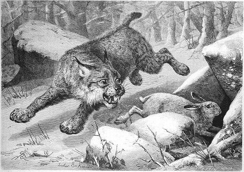 http://commons.wikimedia.org/wiki/File:Die_Gartenlaube_(1880)_b_157.jpg