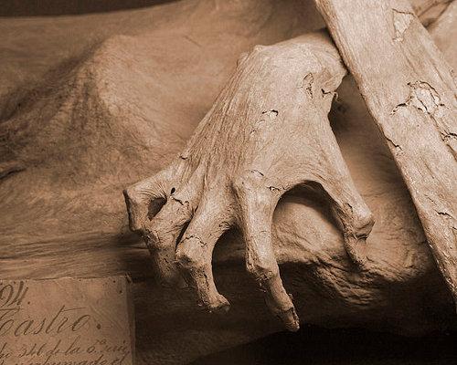 http://commons.wikimedia.org/wiki/File:Guanajuato_mummy_01.jpg
