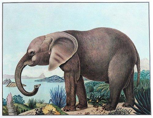 http://commons.wikimedia.org/wiki/File:Der_afrikanische_Elefant.jpg