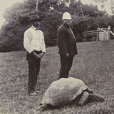 https://commons.wikimedia.org/wiki/File:Jonathan-the-tortoise-1900.jpeg