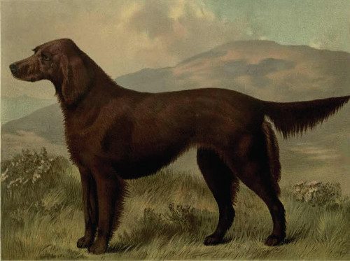 https://commons.wikimedia.org/wiki/File:Irish_Setter_circa_1881.jpg