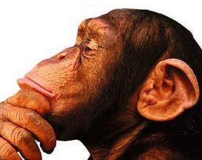 http://commons.wikimedia.org/wiki/Category:Thinking#mediaviewer/File:Mono_pensador.jpg