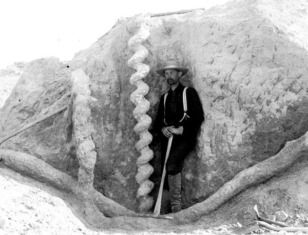 http://commons.wikimedia.org/wiki/File:Daemonelix_burrows,_Agate_Fossil_Beds.jpg