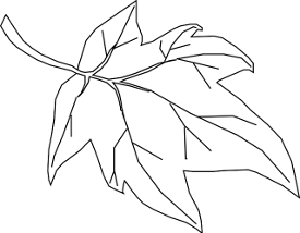 https://pixabay.com/en/maple-leaf-outline-tree-nature-296613/