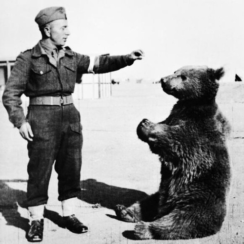 https://commons.wikimedia.org/wiki/File:Wojtek_the_bear.jpg