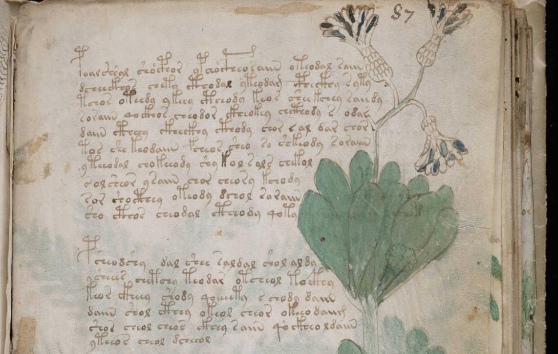 https://commons.wikimedia.org/wiki/File:Voynich_Manuscript_(159).jpg