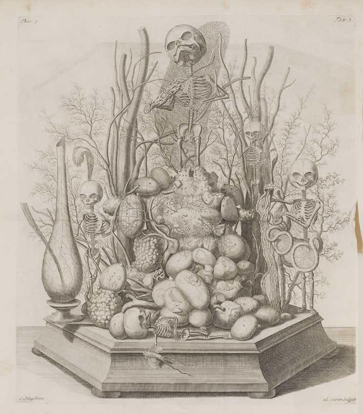https://commons.wikimedia.org/wiki/File:Cornelius_Huyberts_Vanitas-Diorama_Frederik_Ruysch_1721.jpg