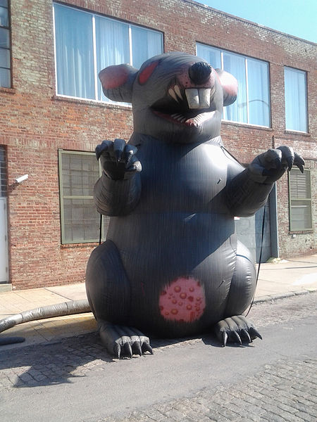 https://commons.wikimedia.org/wiki/File:Union-rat.jpg