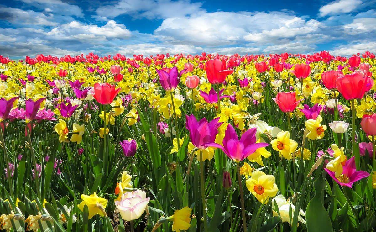 https://pixabay.com/en/spring-awakening-spring-1197602/