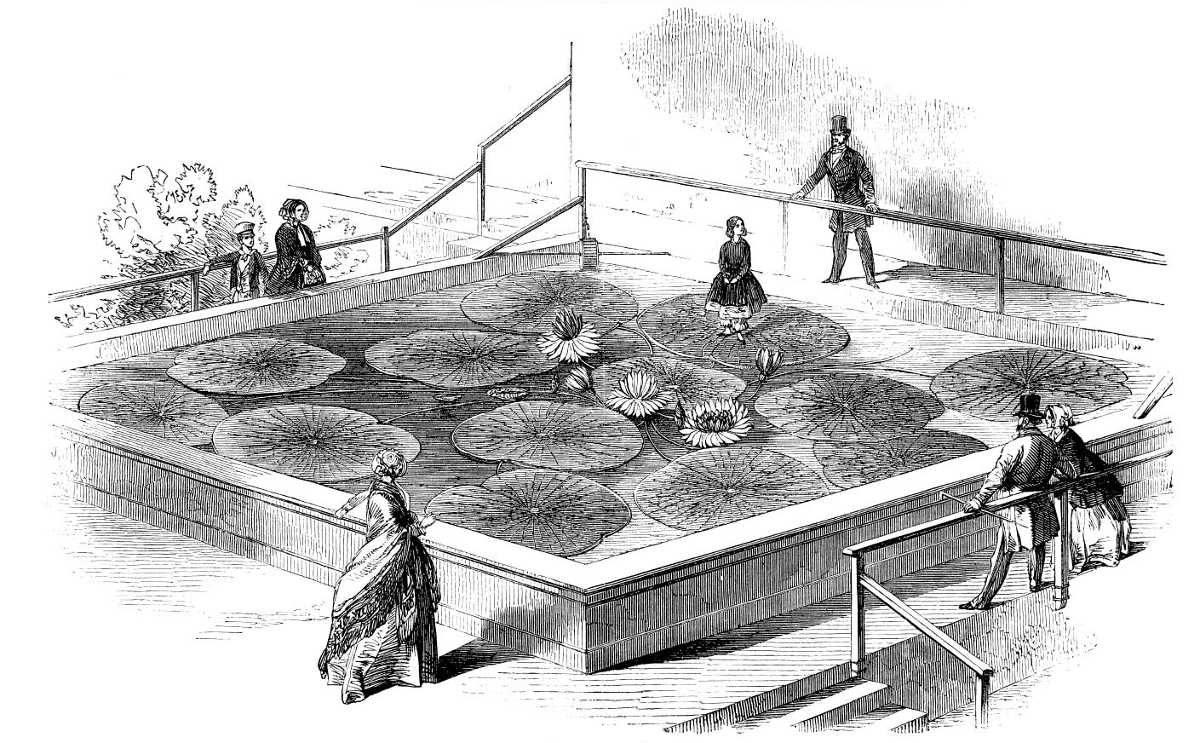 https://commons.wikimedia.org/wiki/File:Victoria_Regia_LIN_1849-.jpg