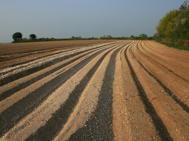 https://commons.wikimedia.org/wiki/File:Furrows_in_a_potato_field_near_Five_Lanes_End_-_geograph.org.uk_-_403311.jpg