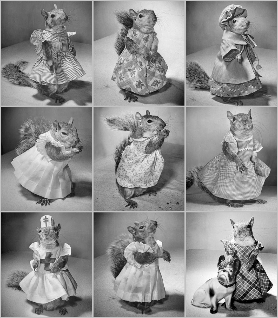 https://commons.wikimedia.org/wiki/File:Pet-Squirrel-Grid-LIFE-1944.jpg