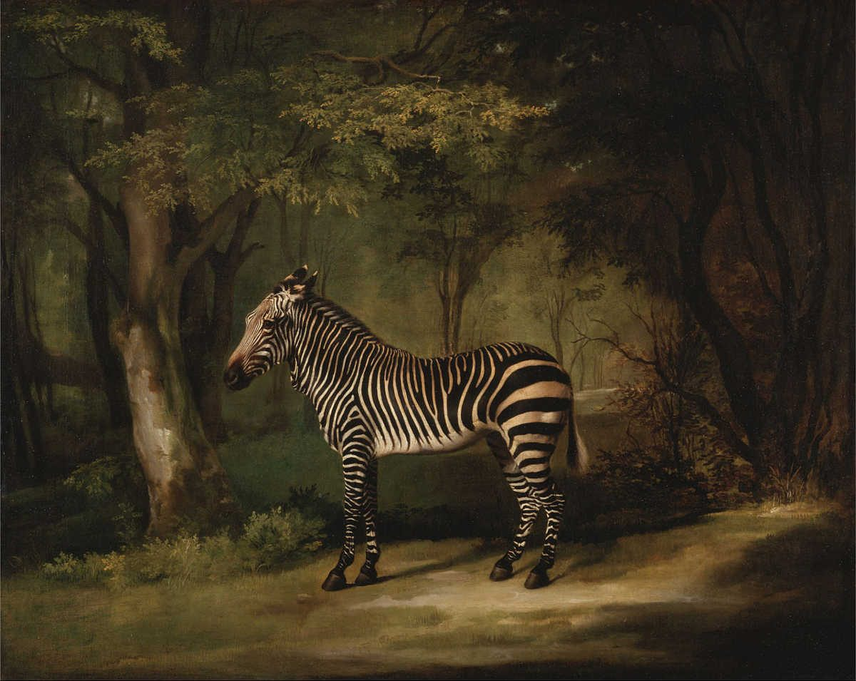 https://commons.wikimedia.org/wiki/File:George_Stubbs_-_Zebra_-_Google_Art_Project.jpg