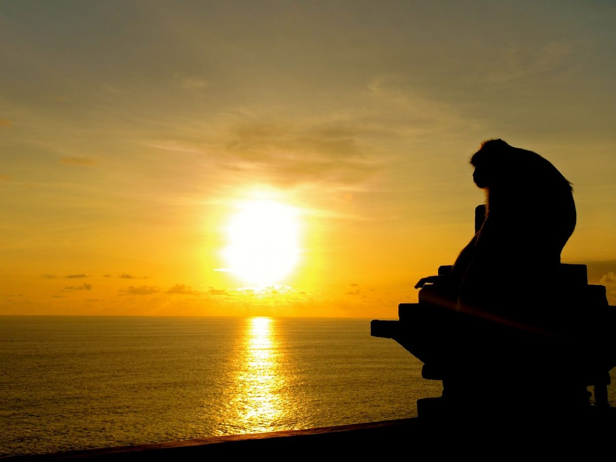 https://pixabay.com/en/sunset-monkey-ape-bali-ocean-sea-653431/