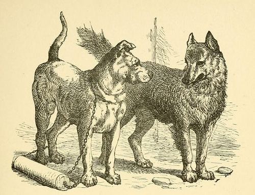 phaedrus - dog and wolf