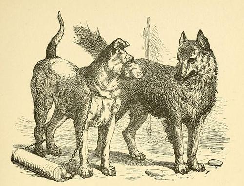 phaedrus - dog and wolf