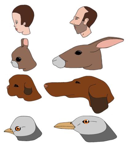 https://commons.wikimedia.org/wiki/File:Animal_human_growth_skull_neoteny_cuteness_maturation.png