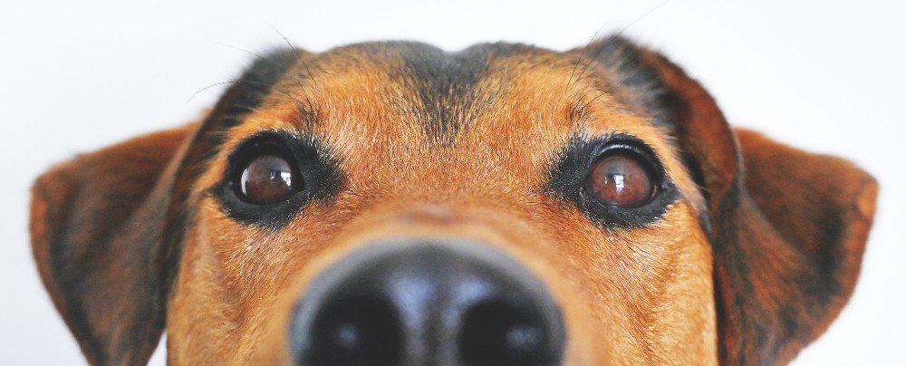 https://www.pexels.com/photo/adorable-blur-breed-close-up-406014/