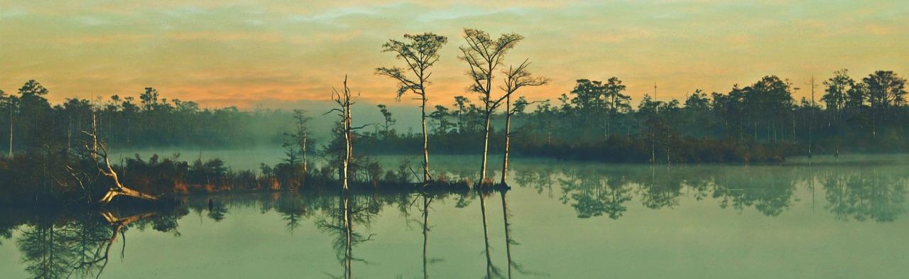 https://pixabay.com/photos/swamp-trees-nature-landscape-water-689355/