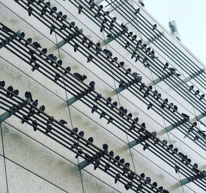 https://www.reddit.com/r/confusing_perspective/comments/exxstb/these_birds_look_like_musical_notes/