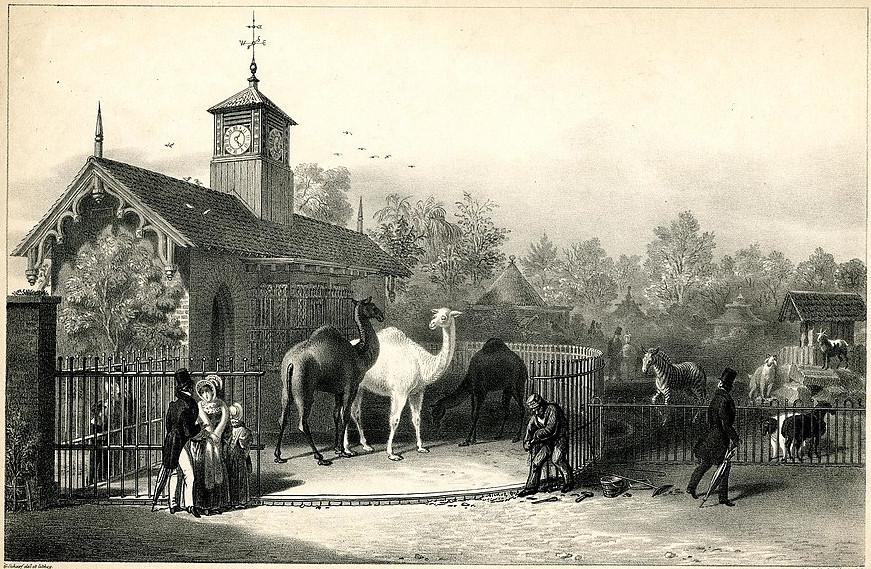 https://commons.wikimedia.org/wiki/File:Zoological_Gardens._Regent%27s_Park._(BM_1893,0803.88.1).jpg