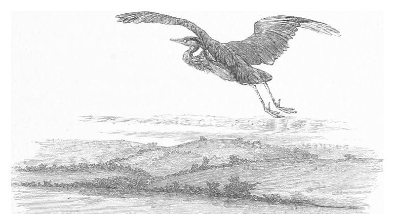 https://commons.wikimedia.org/wiki/File:RO(1875)_P195_HERON.jpg